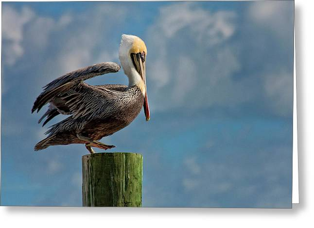 Brown Pelican Ready To Fly Greeting Card