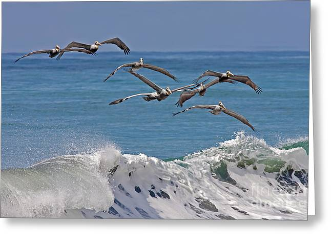 Brown Pelicans Greeting Card