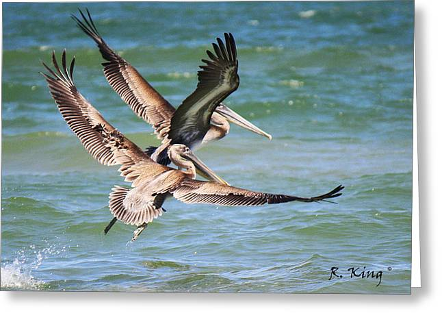 Brown Pelicans Taking Flight Greeting Card by Roena King