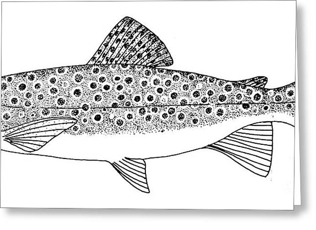 Brown Trout Greeting Card by Granger