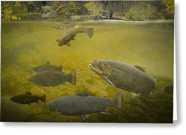Brown Trout In A Stream Greeting Card by Randall Nyhof