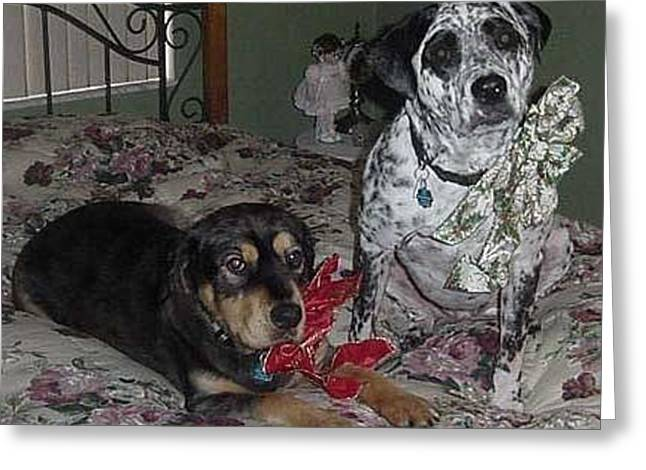 Bruiser And Godiva Greeting Card by Val Oconnor