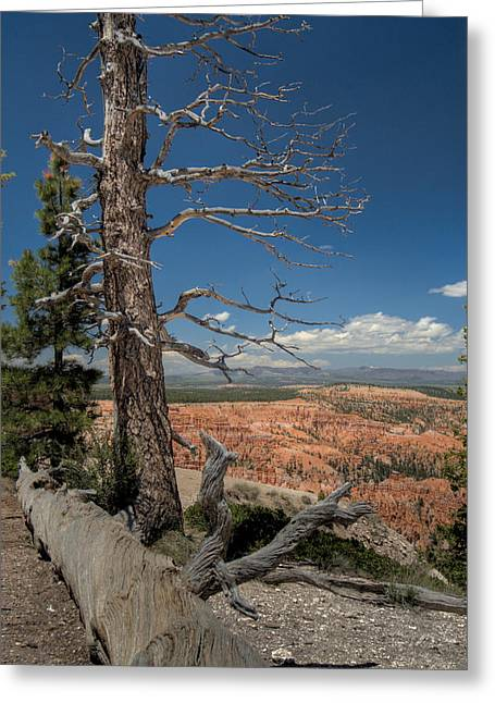 Bryce Canyon - Dead Tree Greeting Card