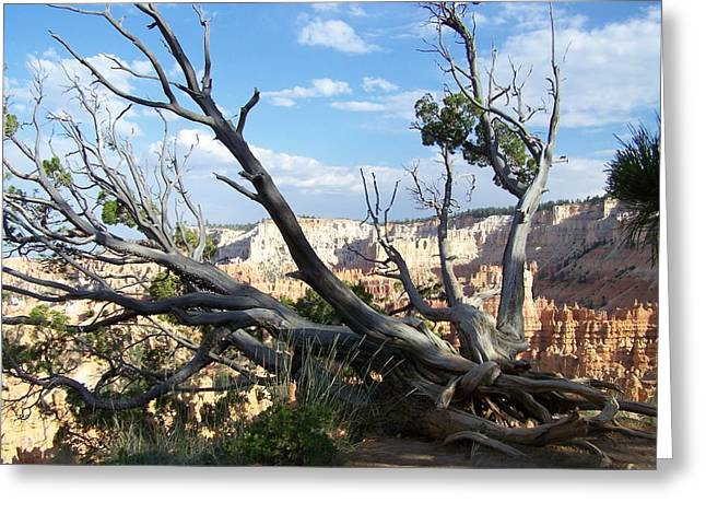 Greeting Card featuring the photograph Bryce Canyon by Dany Lison