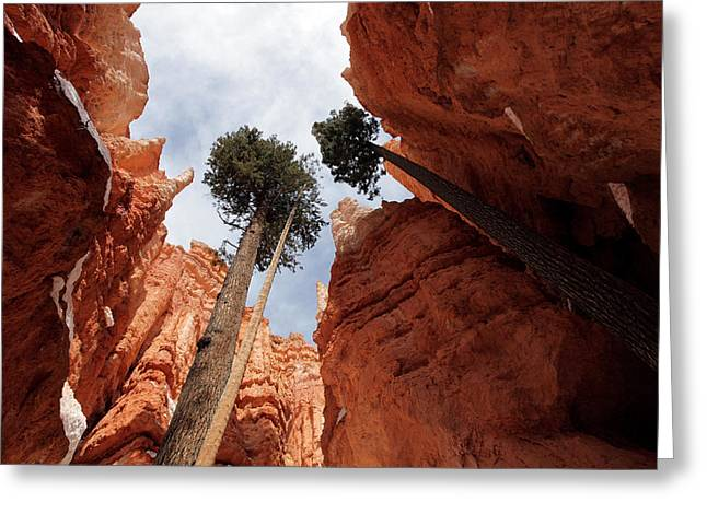 Greeting Card featuring the photograph Bryce Canyon Towering Hoodoos by Karen Lee Ensley