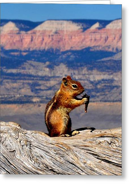 Bryce Lunch Up Close Greeting Card by Mark Bowmer