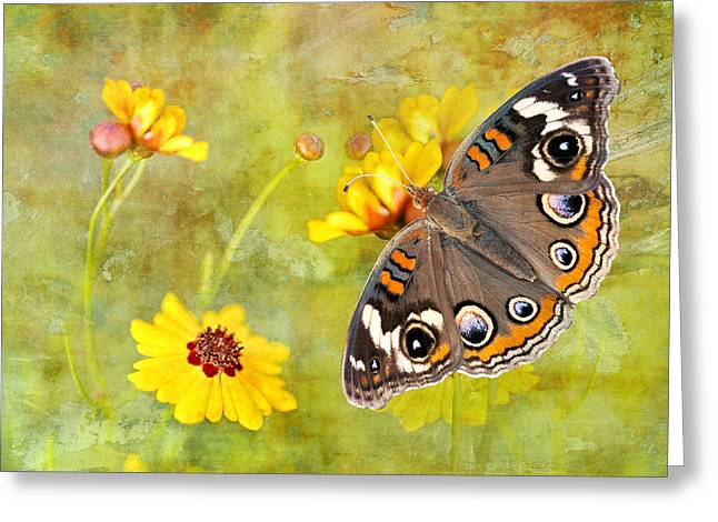 Buckeye Butterfly In The Meadow Greeting Card by Bonnie Barry