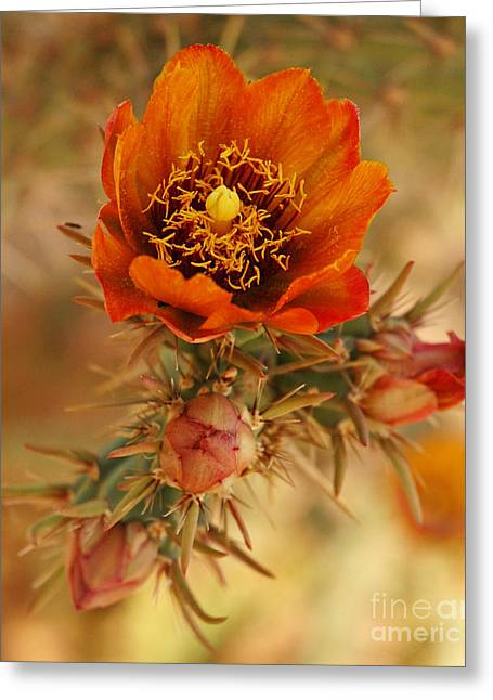 Buckhorn Cholla 2 Greeting Card
