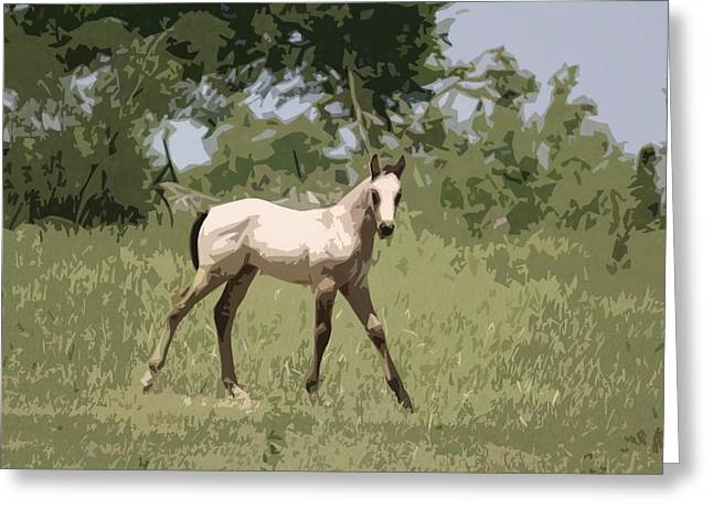 Buckskin Pony Greeting Card