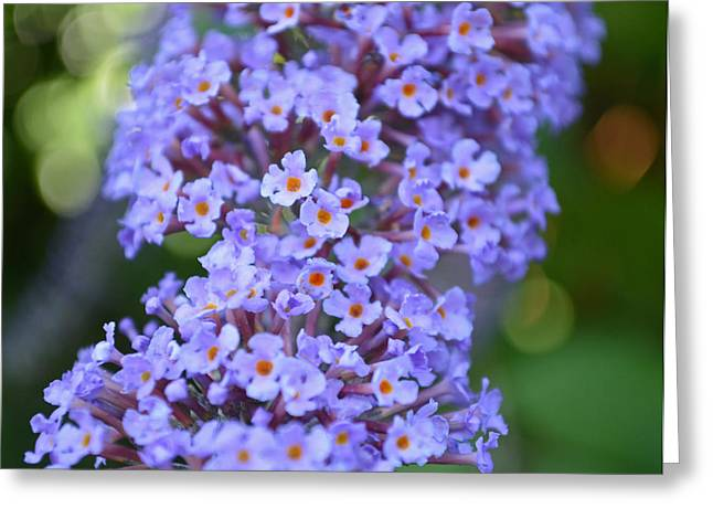 Buddleia Bokeh Greeting Card by Victoria Wise