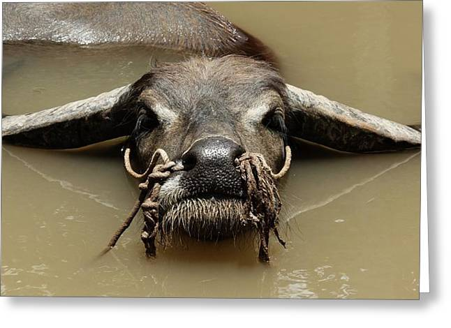 Buffalo Greeting Card by Arik S Mintorogo
