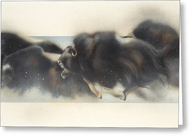 Buffalo In Winter Greeting Card by Douglas Fincham