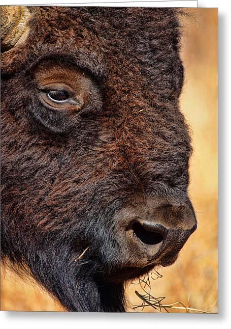 Buffalo Up Close Greeting Card by Alan Hutchins