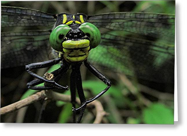 Greeting Card featuring the photograph Bug-eyed by Doug McPherson