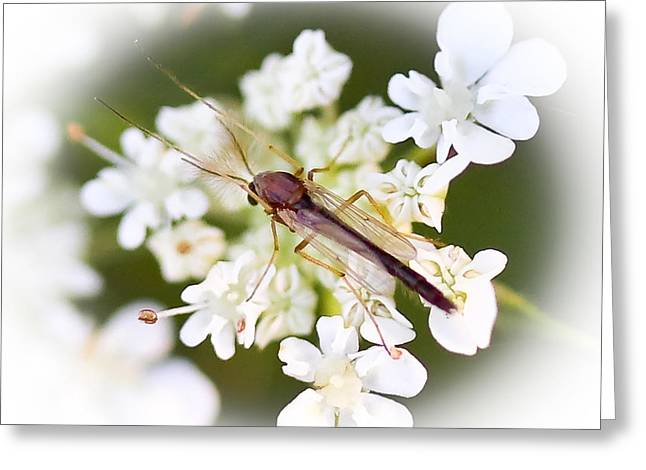 Bug On White Greeting Card by Maureen  McDonald