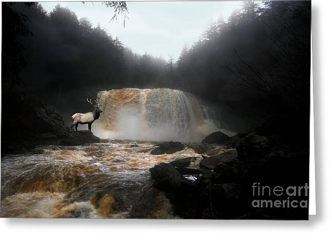 Greeting Card featuring the photograph Bull Elk In Front Of Waterfall by Dan Friend