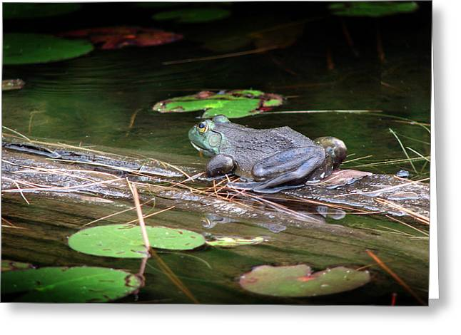 Bull Frog Greeting Card by Bruce Ritchie
