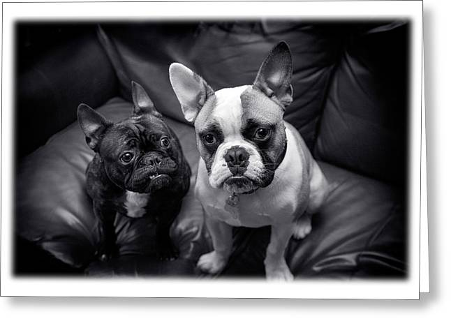 Bulldog Buddies Greeting Card