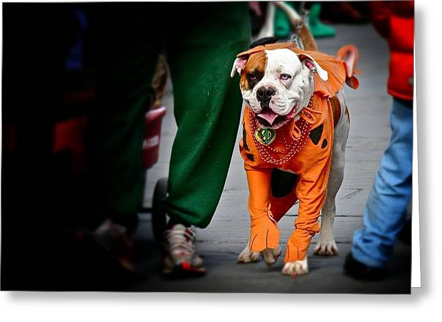 Greeting Card featuring the photograph Bulldog In Orange Costume by Jim Albritton
