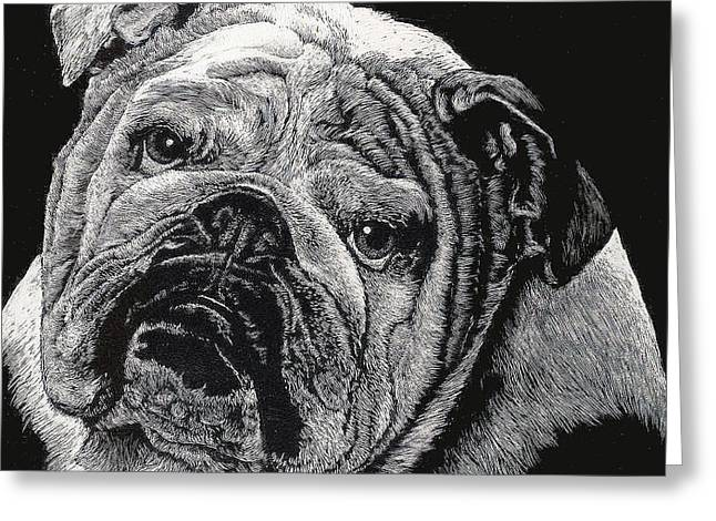 Greeting Card featuring the drawing Bulldog by Rachel Hames