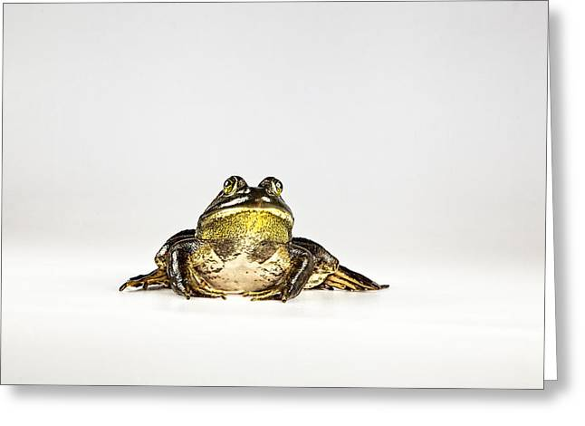 Greeting Card featuring the photograph Bullfrog by John Crothers