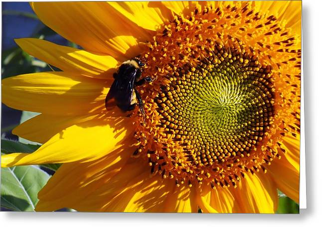 Greeting Card featuring the photograph Bumble Bee And Sunshine by Lynnette Johns
