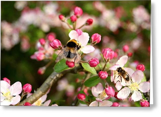 Bumble Blossom Greeting Card