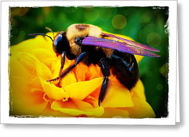 Bumblebee With Bokeh Greeting Card by Judi Bagwell