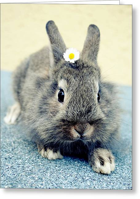 Bunny Greeting Card by Falko Follert