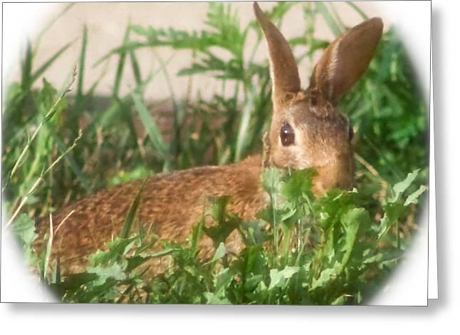 Bunny Playing Hide And Seek Greeting Card by Maureen  McDonald