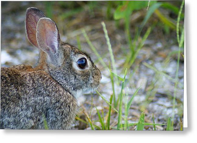 bunny Upclose Greeting Card by Florene Welebny
