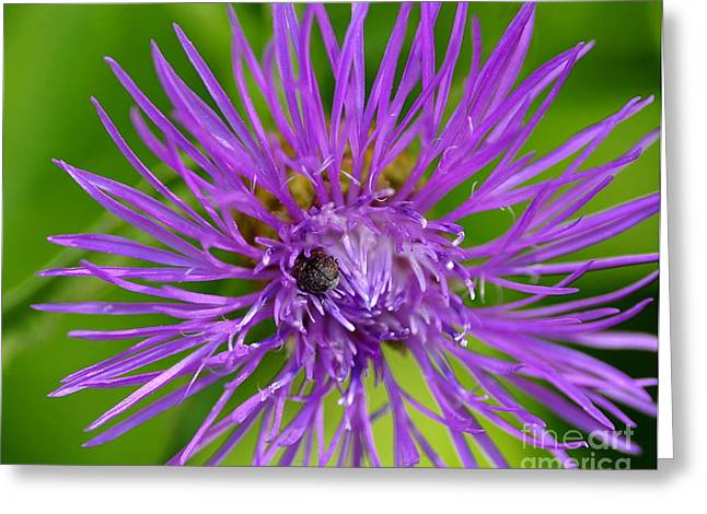 Buried In Purple Greeting Card by Scott Gould