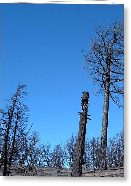 Burned Trees 1 Greeting Card by Naxart Studio