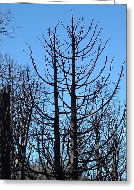 Burned Trees 2 Greeting Card by Naxart Studio