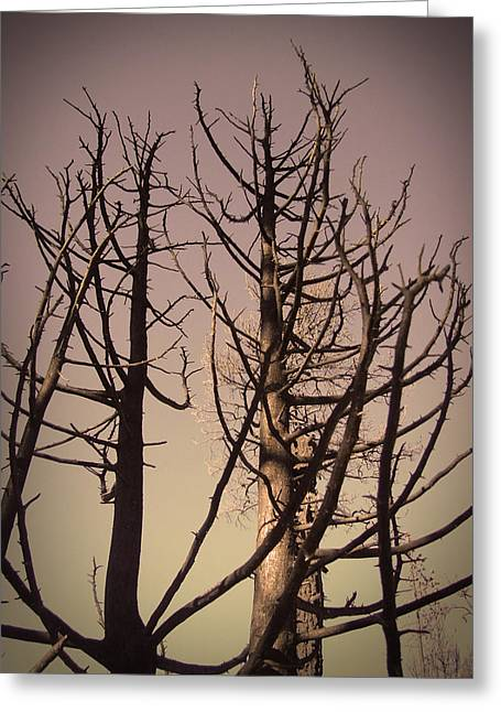 Burned Trees 3 Greeting Card by Naxart Studio
