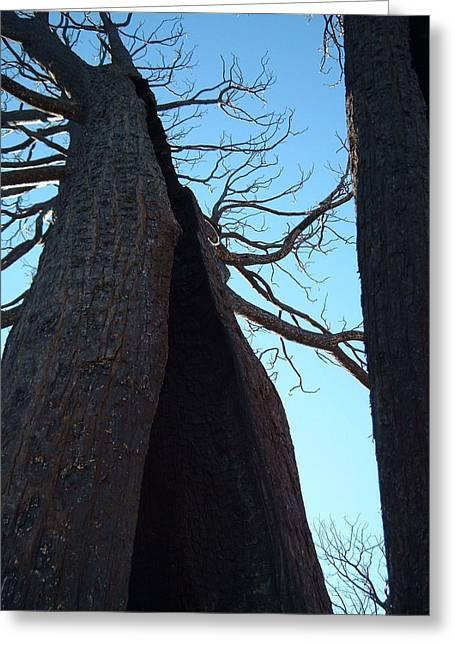 Burned Trees 7 Greeting Card by Naxart Studio