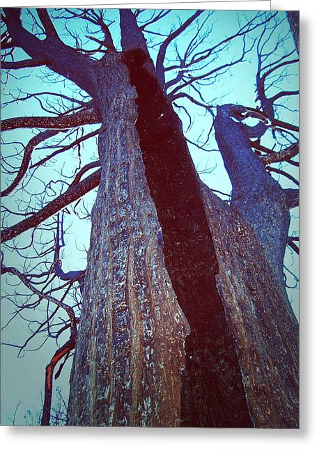 Burned Trees 8 Greeting Card by Naxart Studio