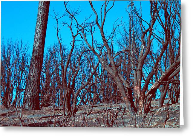 Burned Trees And The Sky Greeting Card by Naxart Studio