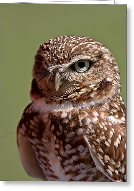 Burrowing Owl Looking At You Greeting Card by Mark Duffy