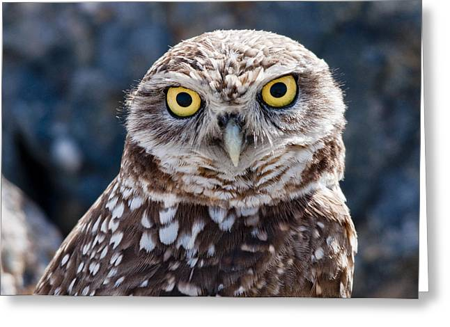 Burrowing Owl Portrait Greeting Card