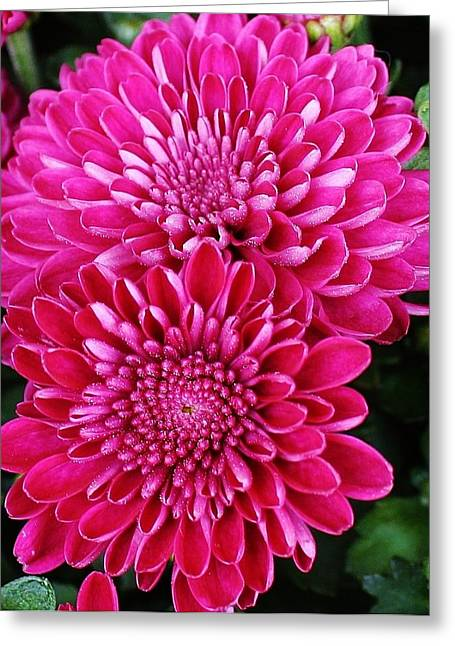 Burst Of Pink Greeting Card by Bruce Bley