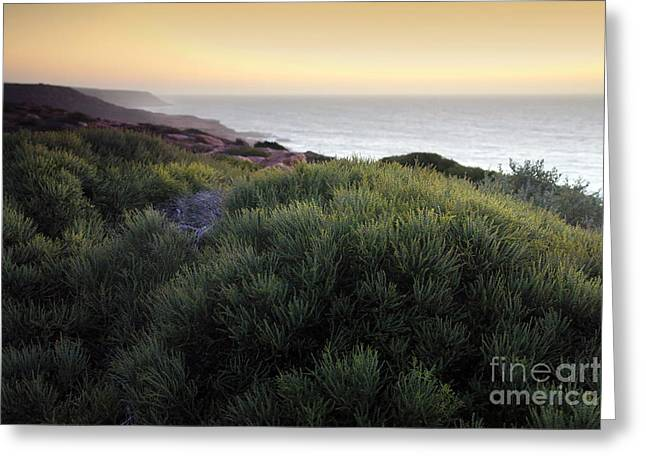 Bush At Twilight Greeting Card by Roberto Bettacchi