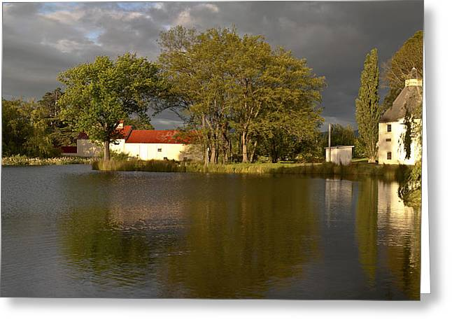 Greeting Card featuring the photograph Bushy Park Panorama by Odille Esmonde-Morgan