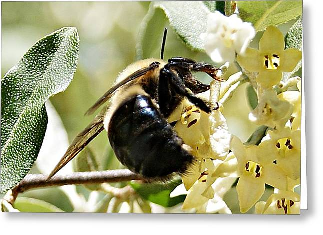 Busy As A Bee Greeting Card by Joe Faherty