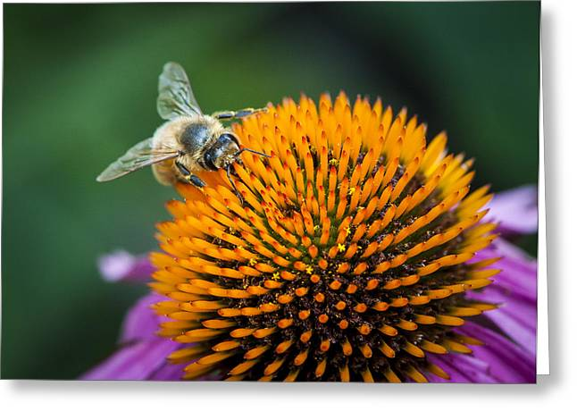 Busy Bee Greeting Card by Jen Morrison