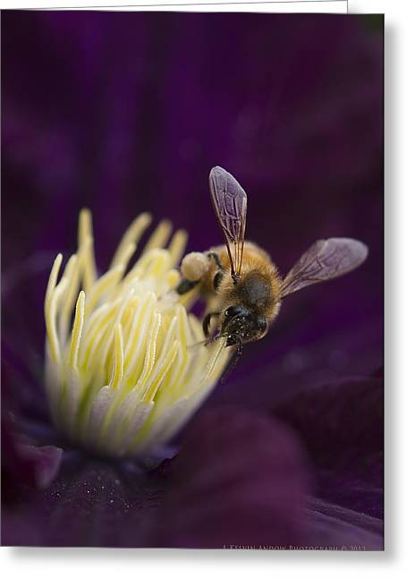 Busy Bee Greeting Card by Kelvin Andow