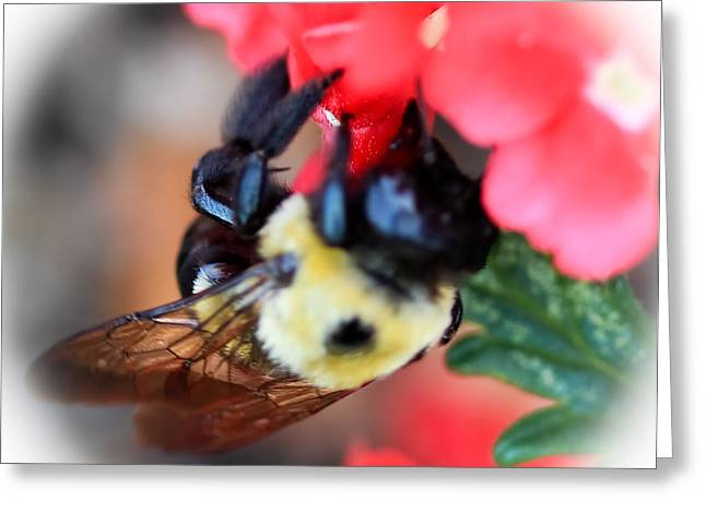 Busy Bee Greeting Card by Maureen  McDonald