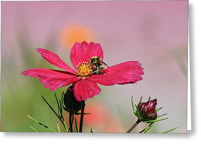 Busy Bee Greeting Card by Ronald Lafleur