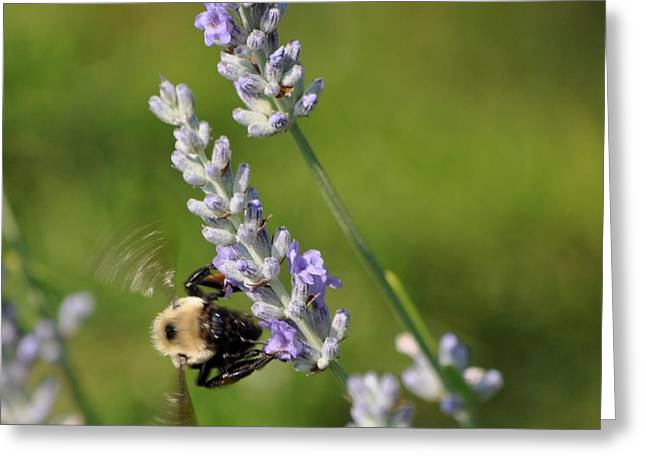 Busy Bee Greeting Card by Terri Albertson
