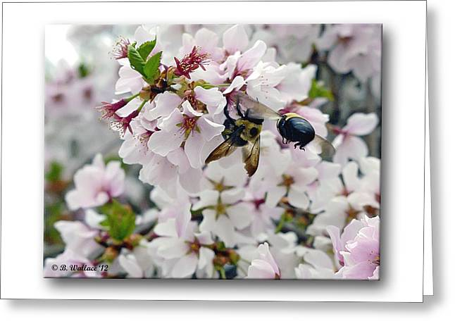 Busy Bees Greeting Card by Brian Wallace